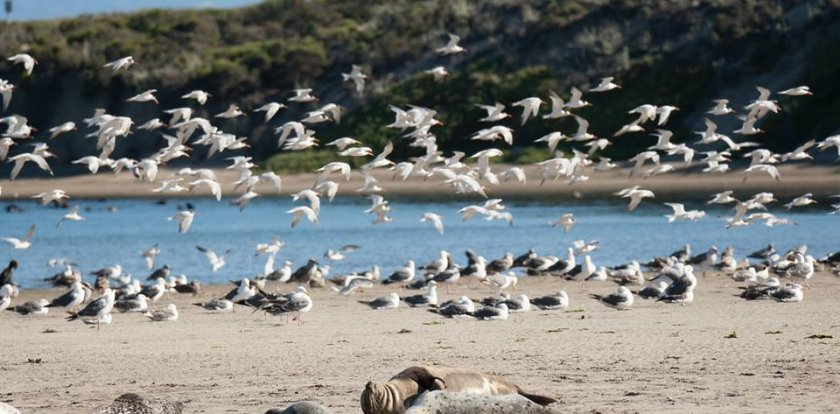 Bird Watching in Moss Landing