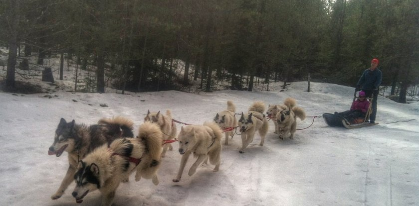 Dog Sledding in Bigfork