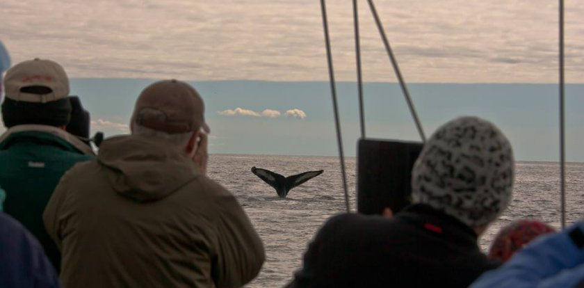 Whale Watching in Grand Manan Island