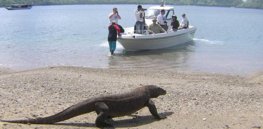 Photo Tour in Komodo Island