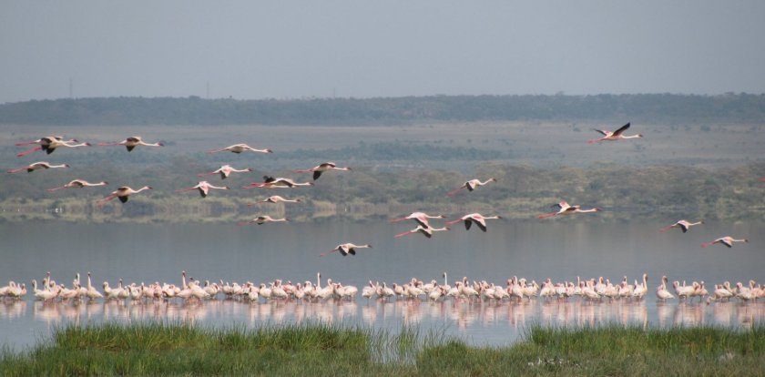 Bird Watching in Nakuru