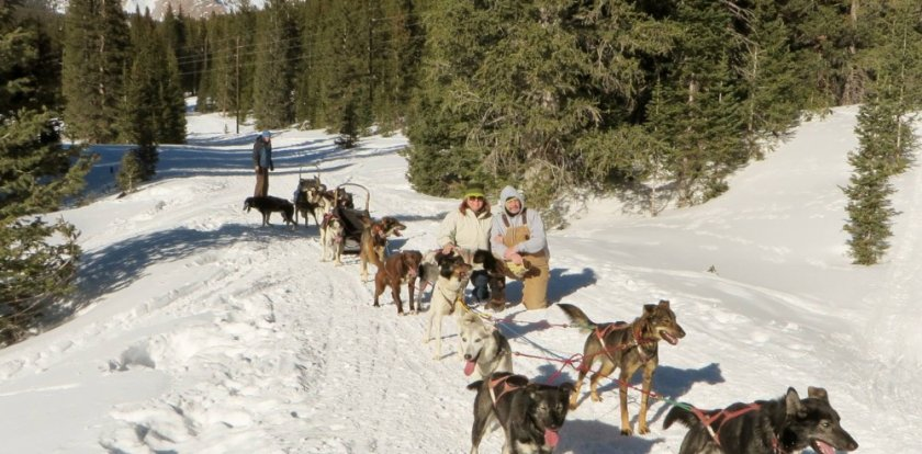 Dog Sledding in Salida