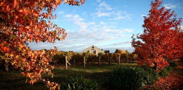 Wine Tour in Hawke's Bay