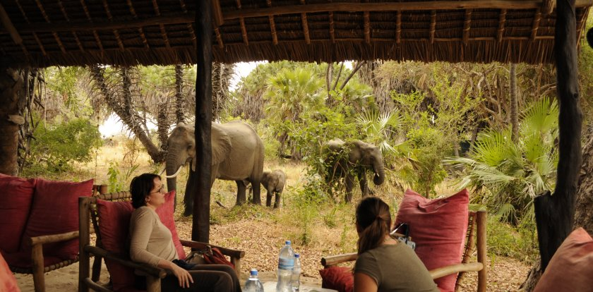 Wildlife Safari in Arusha