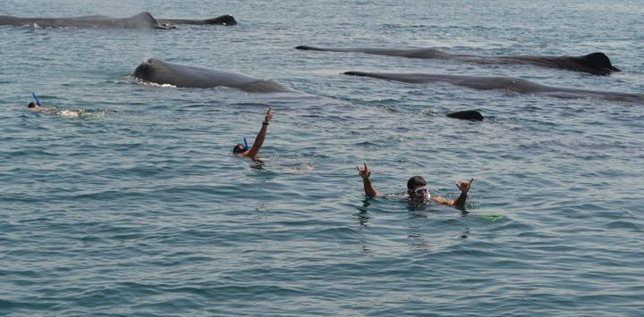Whale Watching in La Paz
