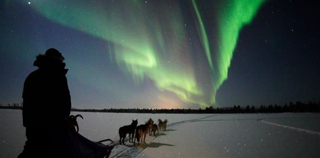 Dog Sledding in Kiruna