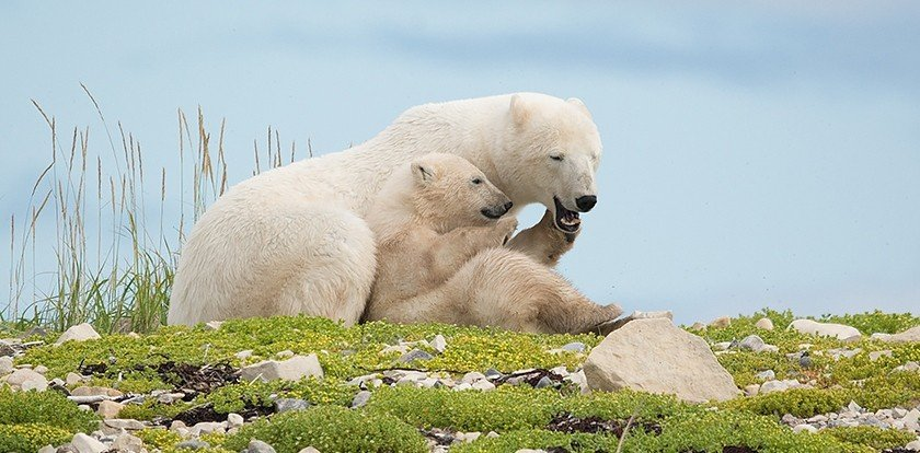 Wildlife Photography in Churchill