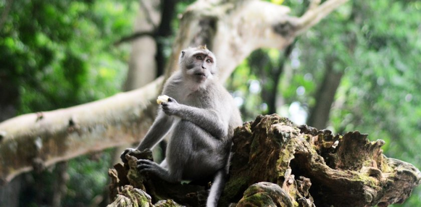 Wildlife Tour in Ubud
