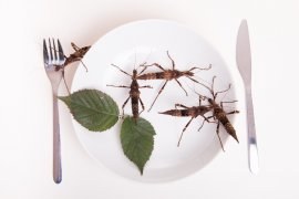 Why You Need A Grasshopper In Your Mouth