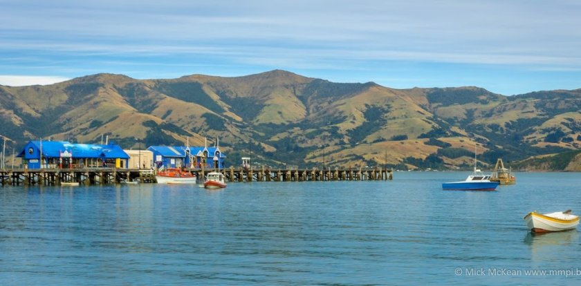 Sailing in Akaroa
