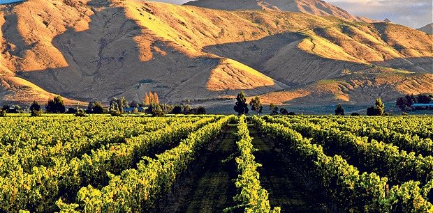 Wine Tour in South Island