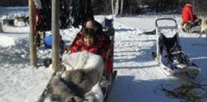 Dog Sledding in Fairbanks