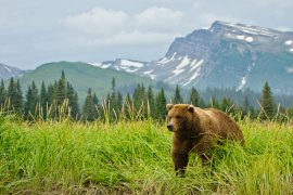 The Largest Animals In Alaska and Where to Spot