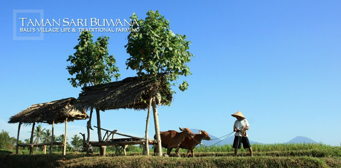 Private Tour in Bali with Wayan Sumatra