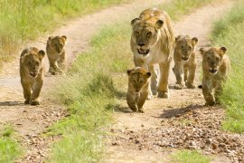 African Animals: 64 Things You Don't Know