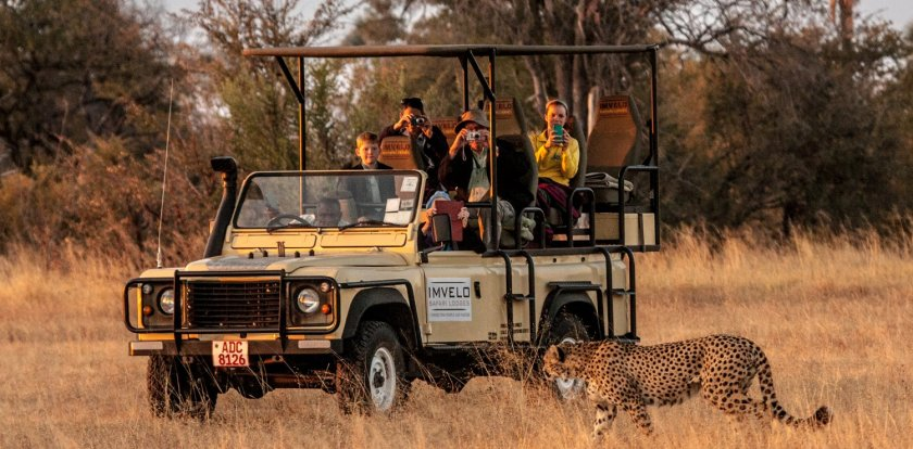 Wildlife Safari in Victoria Falls