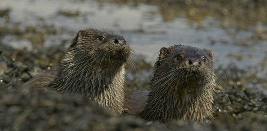 Wildlife Tour in Isle of Mull