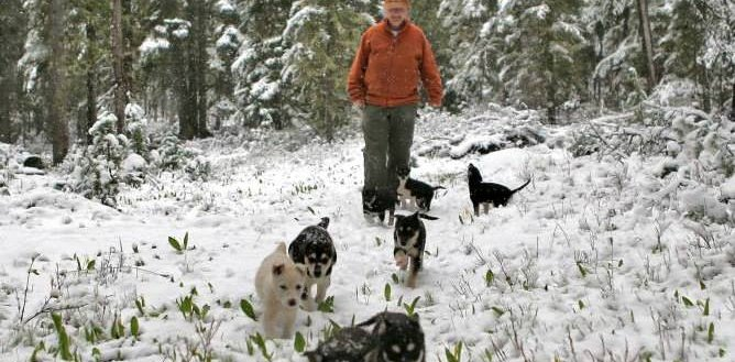 Dog Sledding in West Yellowstone with Charlotte Mooney