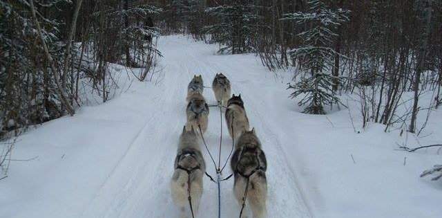 Dog Sledding in Prince George
