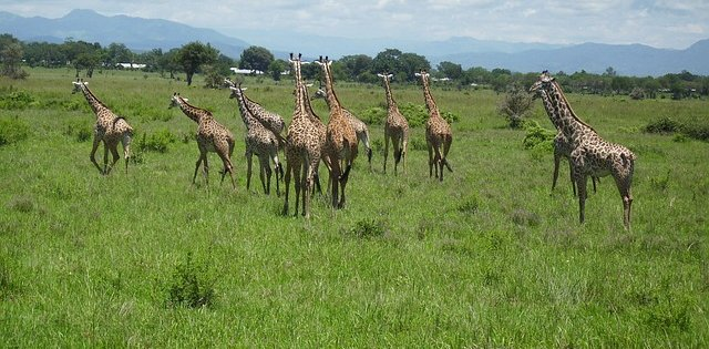 Wildlife Safari in Morogoro