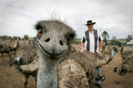 15 Best Animal Photobombs of All Time