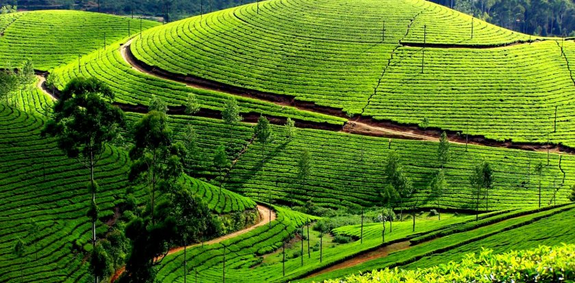 Car Tour in Munnar