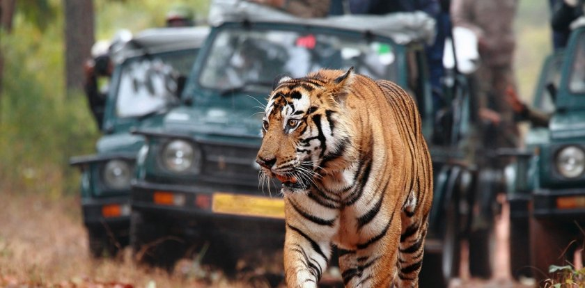 Wildlife Safari in New Delhi