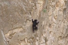 Rock Climbing Baby Bear in Texas? Yep.