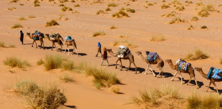 Camel Riding Tour in Ouarzazate