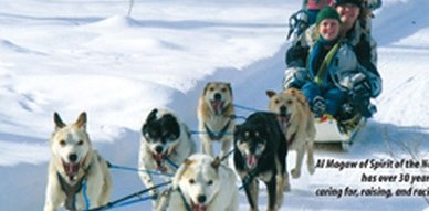 Dog Sledding in Salmo
