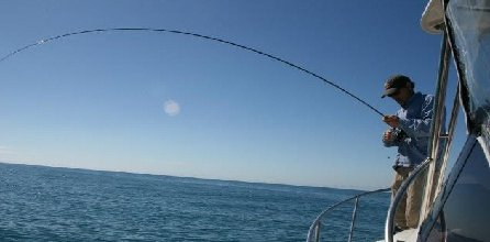 Fishing in Napier