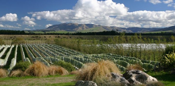 Wine Tour in Christchurch