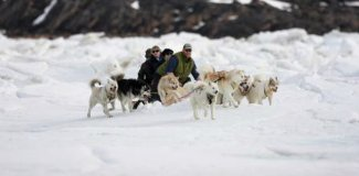 Dog Sledding in Iqaluit
