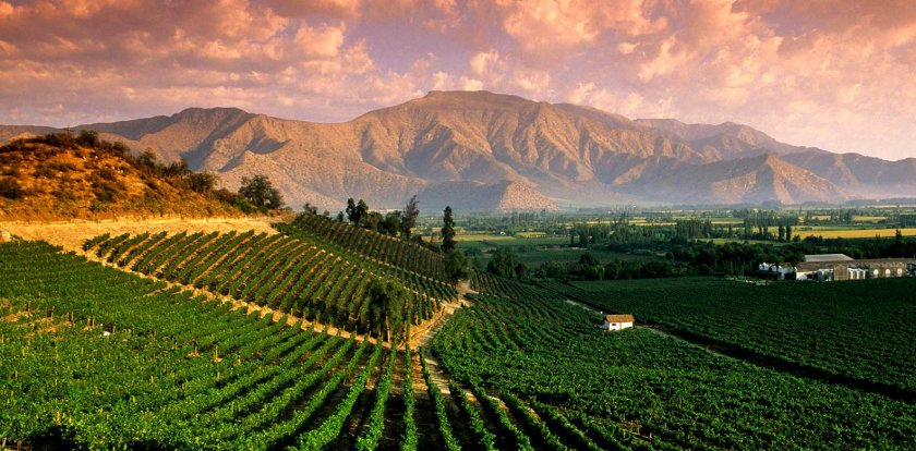 Wine Tour in Mendoza