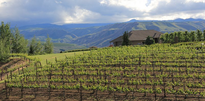 Wine Tour in East Wenatchee